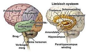 Afbeeldingen Dementie Hersenen